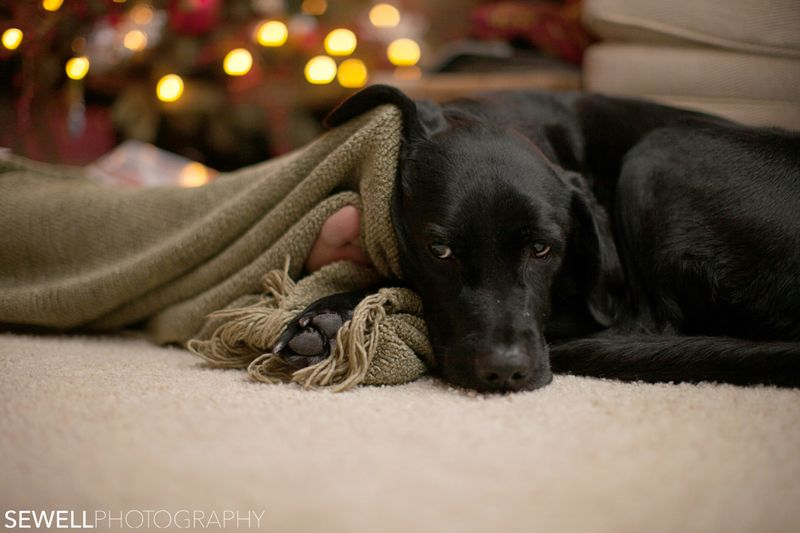 SEWELLPHOTOGRAPHY_DOGS001