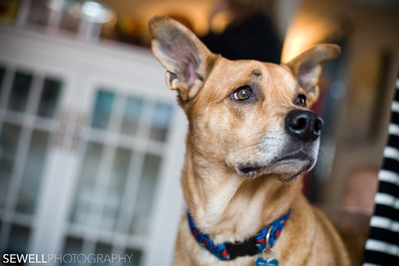 SEWELLPHOTOGRAPHY_DOGS020